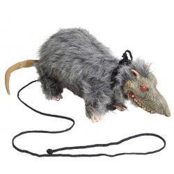 Rata Peluda con Correa