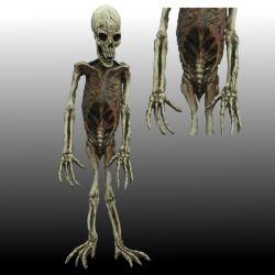Esqueleto de Mono en Latex