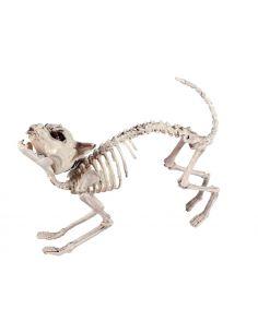 Esqueleto GatoLuz y Sonido Tienda de disfraces online - venta disfraces